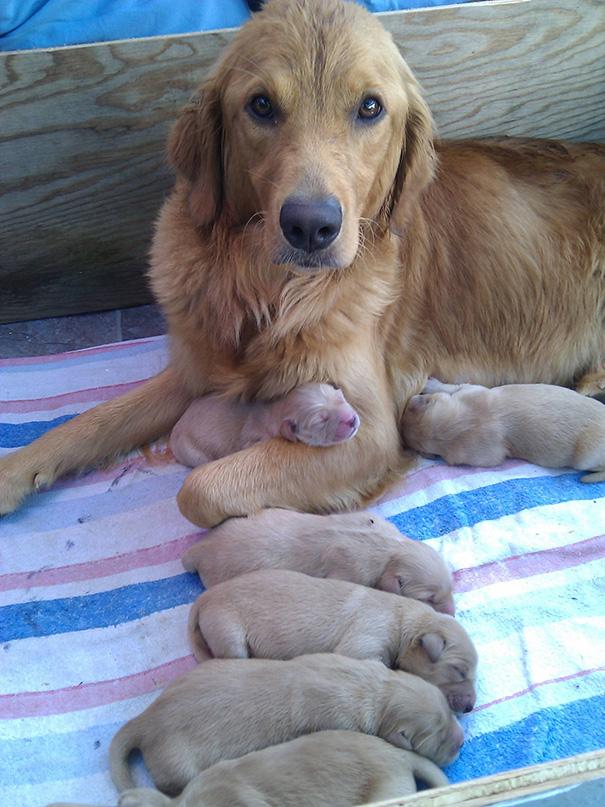 foto-cani-mamma-cuccioli-27