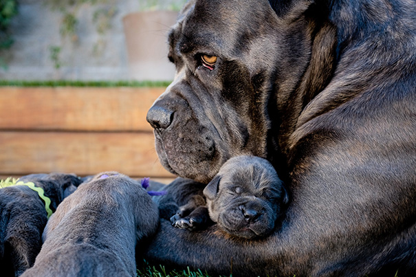 foto-cani-mamma-cuccioli-28