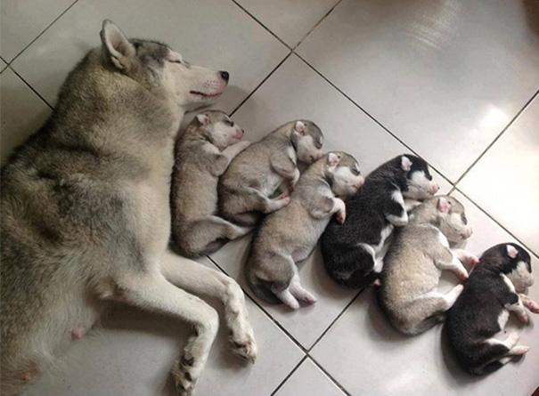 foto-cani-mamma-cuccioli-30