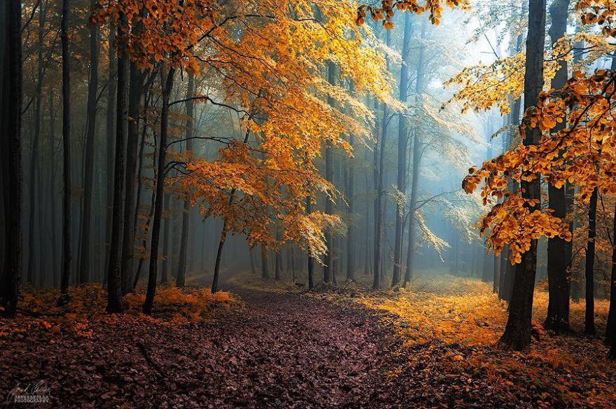 foto-foreste-autunno-repubblica-ceca-janek-sedlar-01