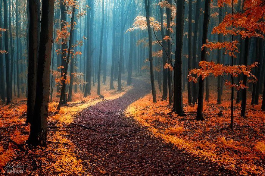 foto-foreste-autunno-repubblica-ceca-janek-sedlar-02