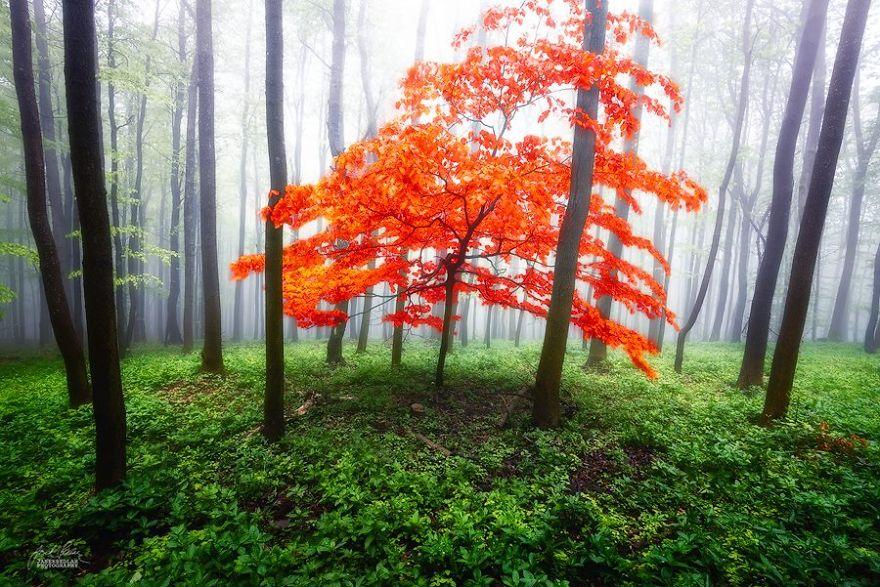 foto-foreste-autunno-repubblica-ceca-janek-sedlar-03