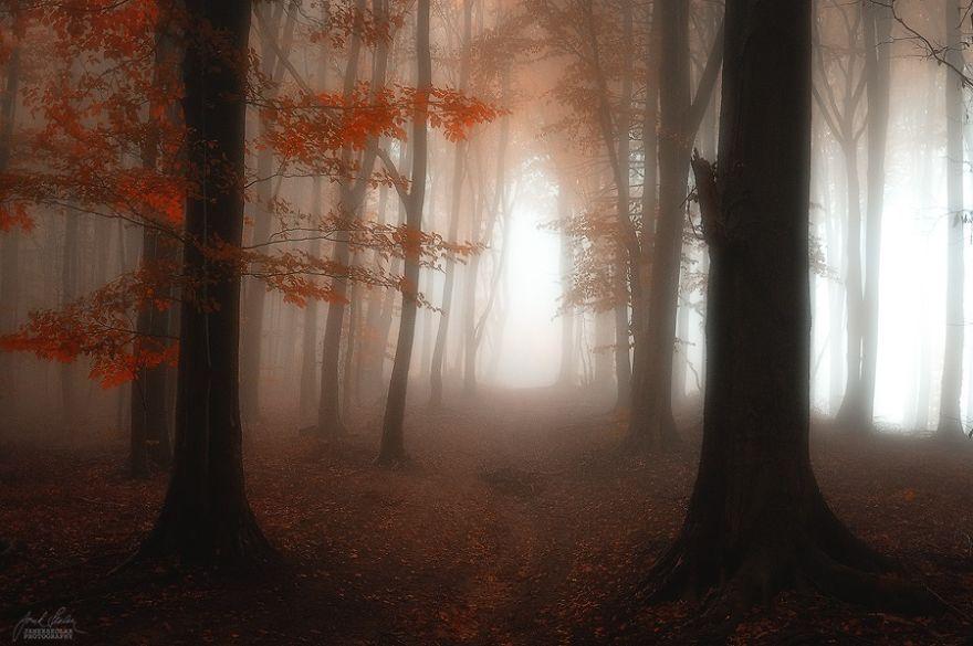 foto-foreste-autunno-repubblica-ceca-janek-sedlar-04
