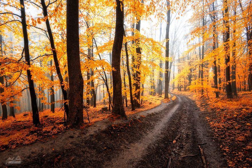 foto-foreste-autunno-repubblica-ceca-janek-sedlar-05