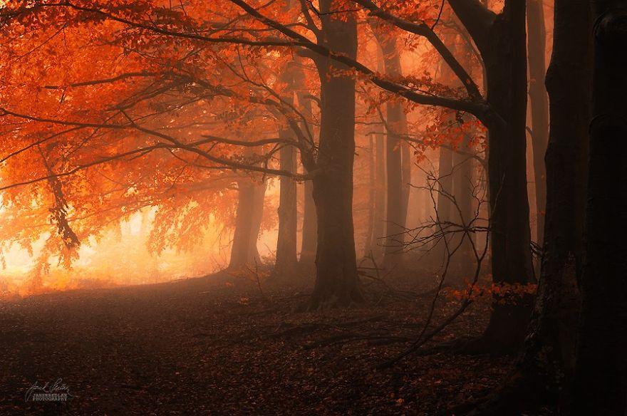 foto-foreste-autunno-repubblica-ceca-janek-sedlar-06