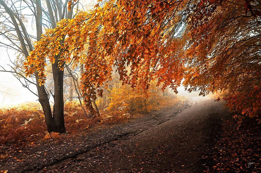 foto-foreste-autunno-repubblica-ceca-janek-sedlar-07