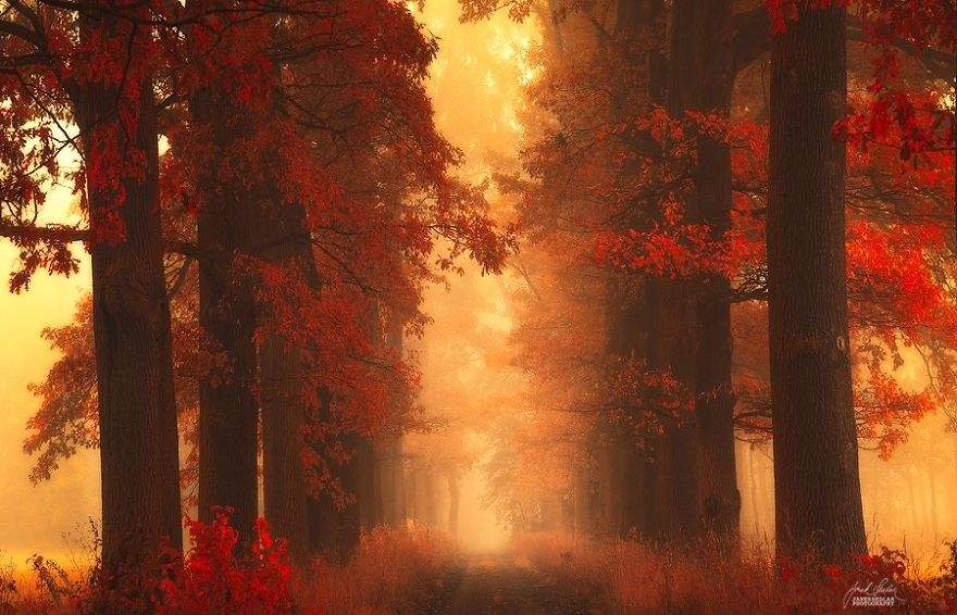 foto-foreste-autunno-repubblica-ceca-janek-sedlar-08