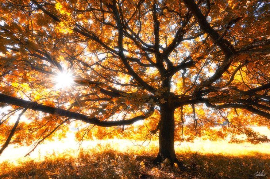foto-foreste-autunno-repubblica-ceca-janek-sedlar-09