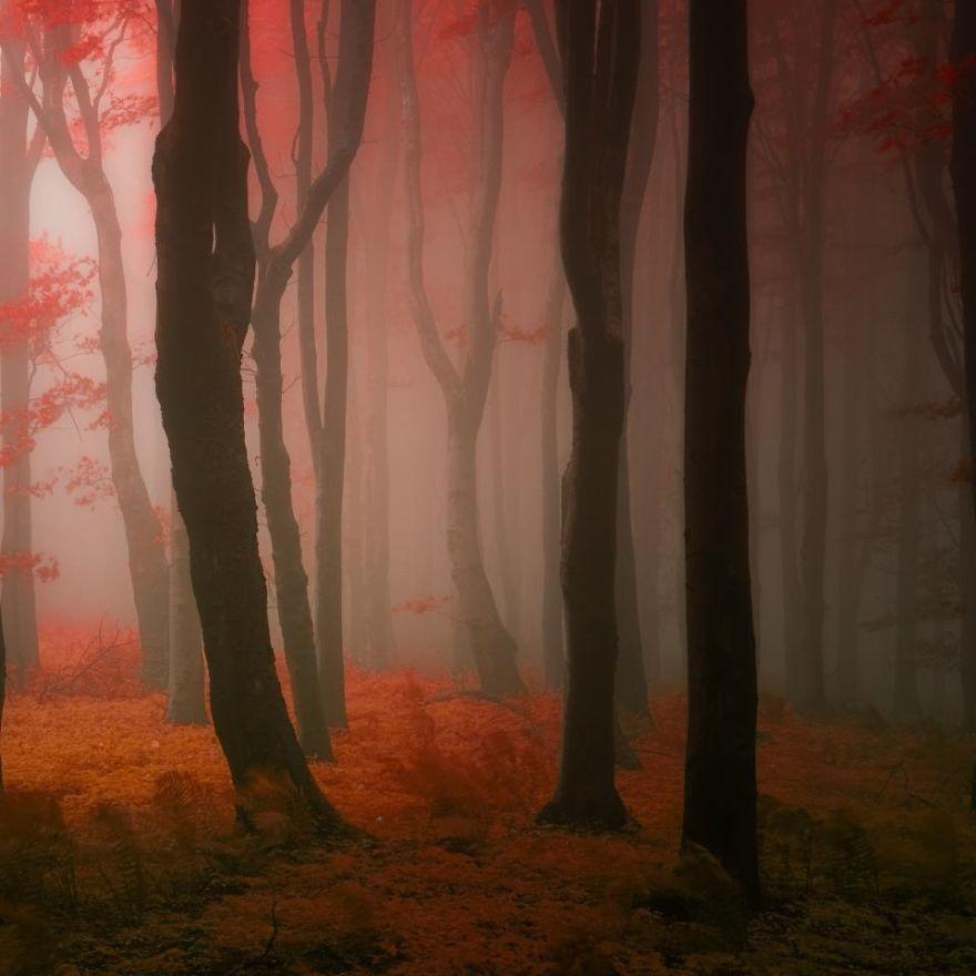foto-foreste-autunno-repubblica-ceca-janek-sedlar-10