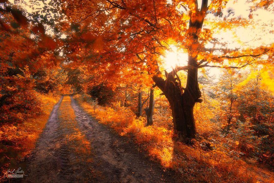 foto-foreste-autunno-repubblica-ceca-janek-sedlar-11