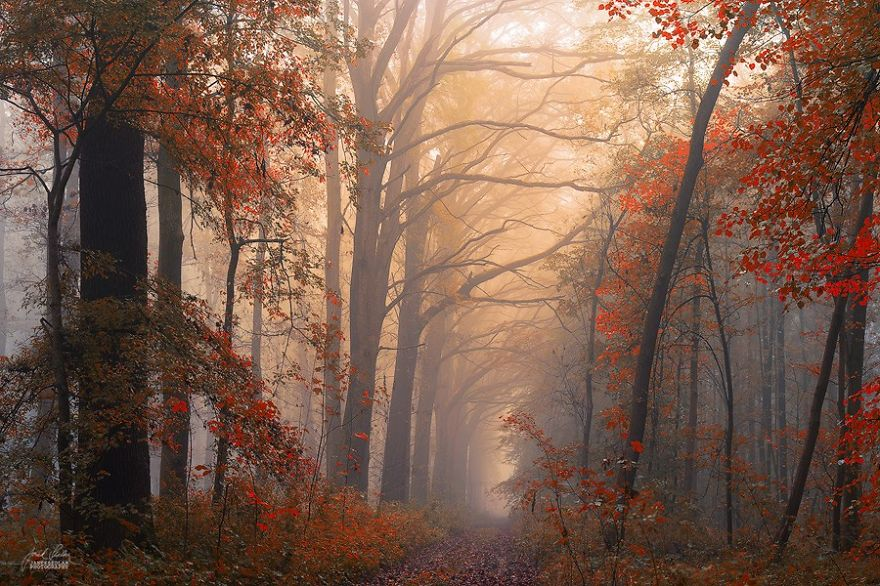 foto-foreste-autunno-repubblica-ceca-janek-sedlar-13