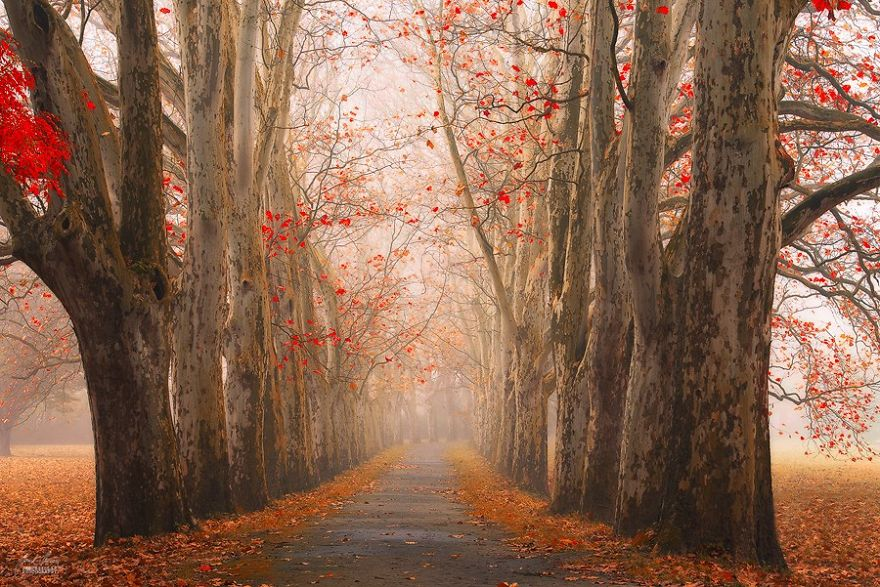 foto-foreste-autunno-repubblica-ceca-janek-sedlar-14