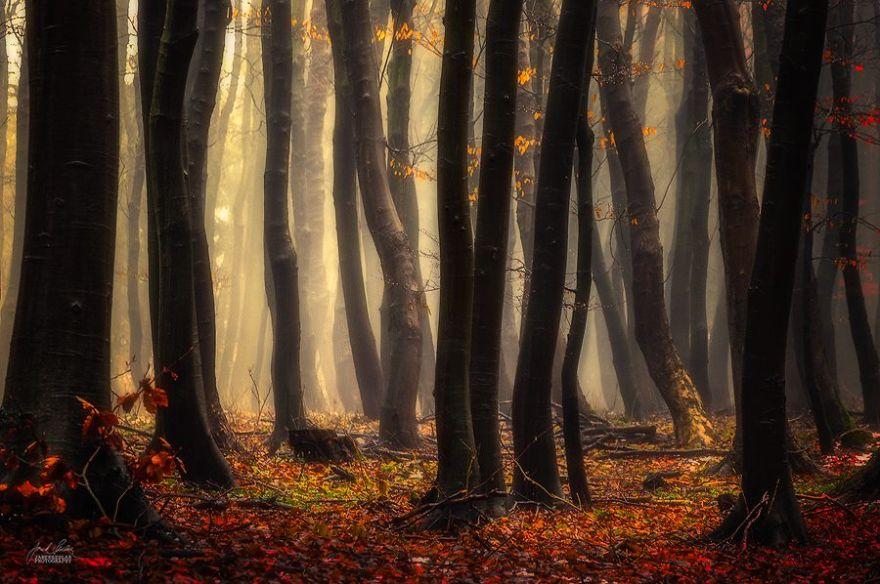 foto-foreste-autunno-repubblica-ceca-janek-sedlar-15