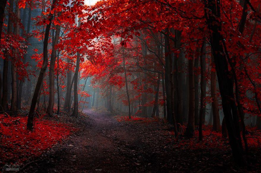 foto-foreste-autunno-repubblica-ceca-janek-sedlar-16