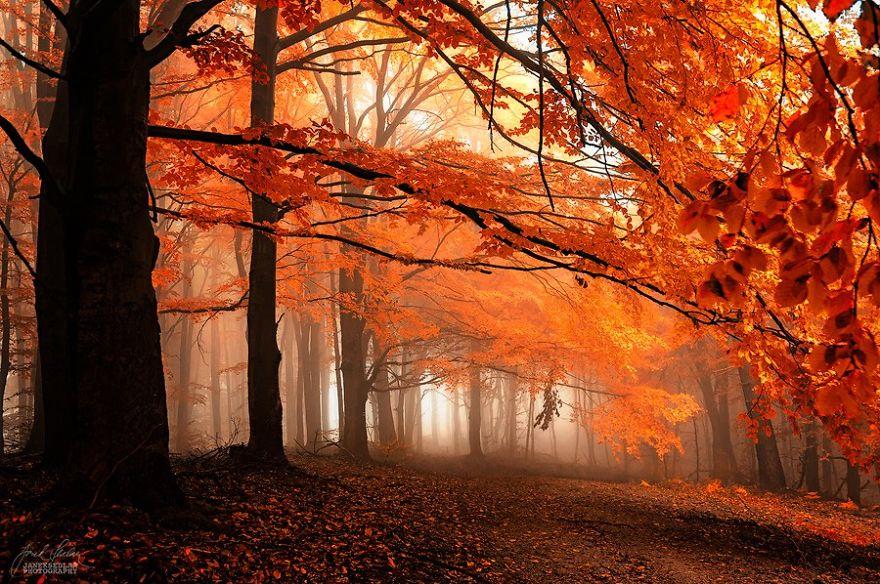 foto-foreste-autunno-repubblica-ceca-janek-sedlar-17