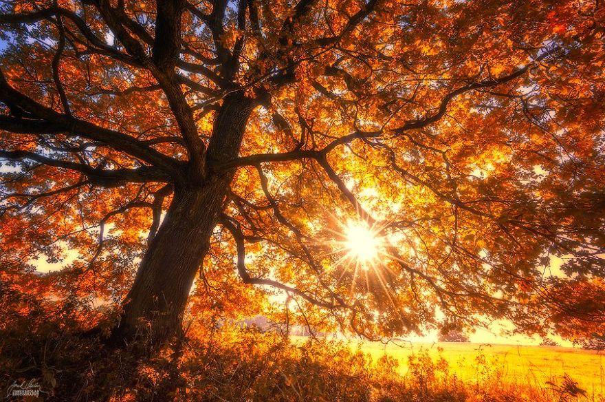 foto-foreste-autunno-repubblica-ceca-janek-sedlar-18