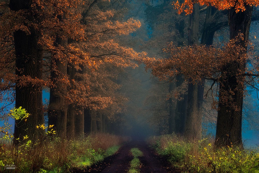 foto-foreste-autunno-repubblica-ceca-janek-sedlar-19