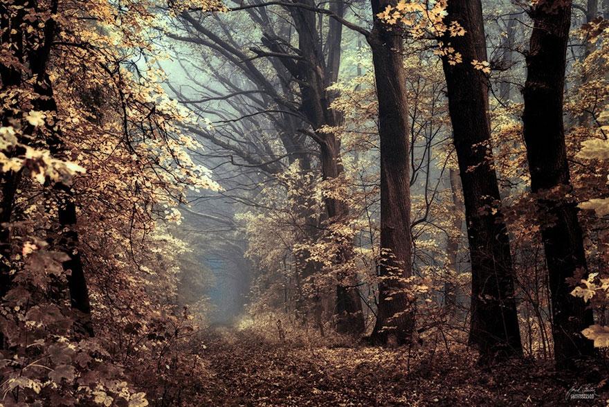 foto-foreste-autunno-repubblica-ceca-janek-sedlar-20