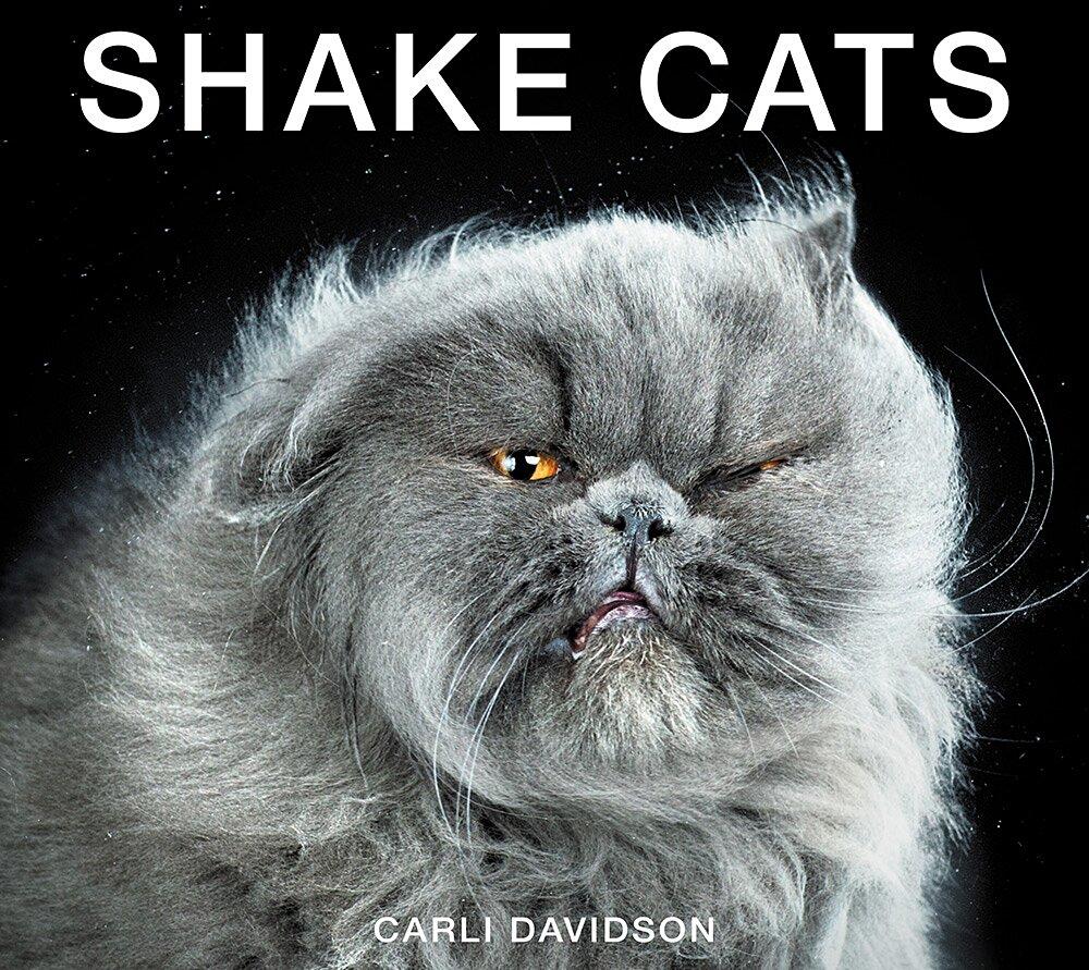 foto-gatti-divertenti-scrollano-shake-cats-carli-davidson-01