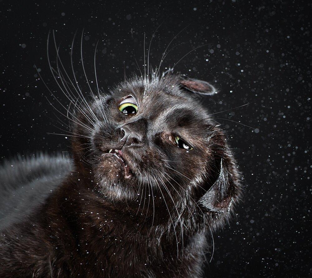 foto-gatti-divertenti-scrollano-shake-cats-carli-davidson-04