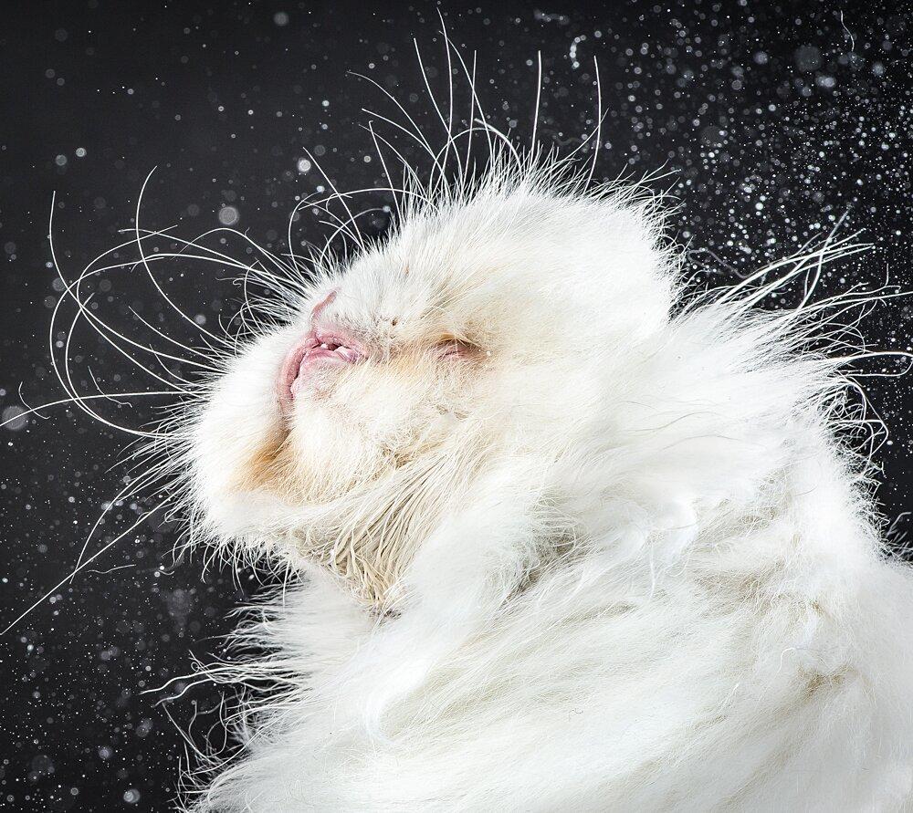 foto-gatti-divertenti-scrollano-shake-cats-carli-davidson-08