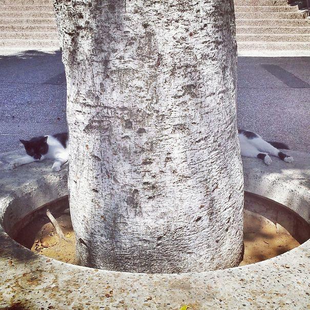 foto-gatti-divertenti-tempismo-perfetto-02