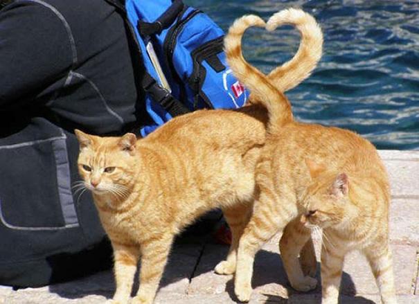 foto-gatti-divertenti-tempismo-perfetto-03