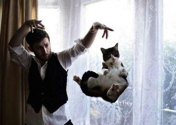 foto-gatti-divertenti-tempismo-perfetto-05