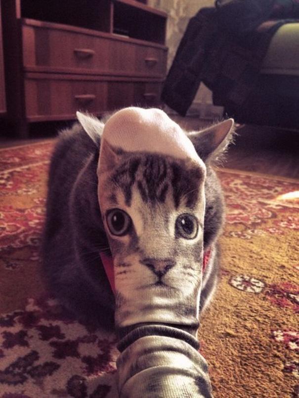 foto-gatti-divertenti-tempismo-perfetto-07