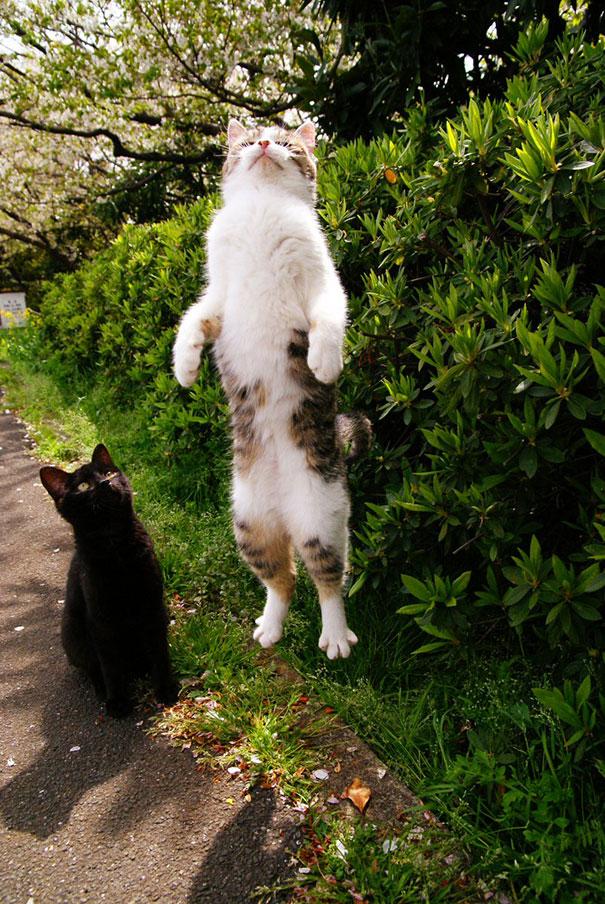foto-gatti-divertenti-tempismo-perfetto-08