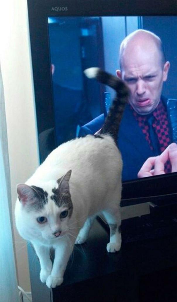 foto-gatti-divertenti-tempismo-perfetto-13