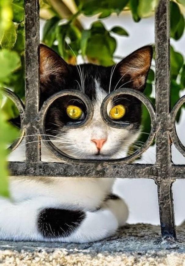 foto-gatti-divertenti-tempismo-perfetto-14