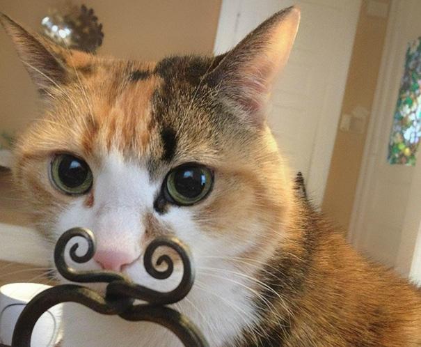 foto-gatti-divertenti-tempismo-perfetto-15