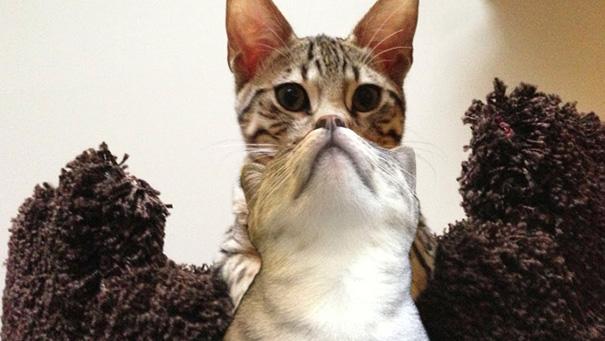 foto-gatti-divertenti-tempismo-perfetto-16