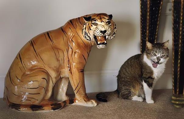 foto-gatti-divertenti-tempismo-perfetto-17