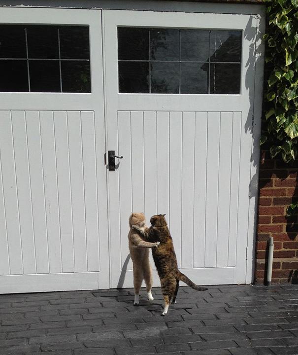 foto-gatti-divertenti-tempismo-perfetto-22