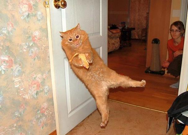 foto-gatti-divertenti-tempismo-perfetto-24