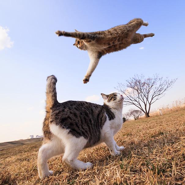 foto-gatti-divertenti-tempismo-perfetto-25