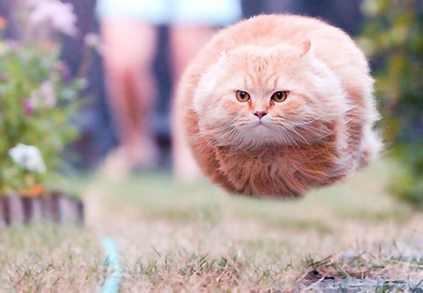 Popolare 44 foto di gatti dal tempismo perfetto scattate al miaomento  VG24