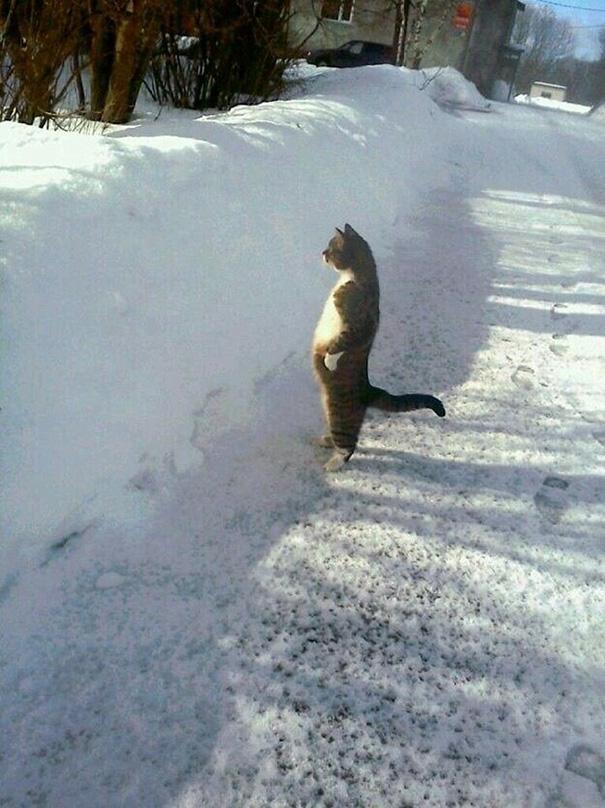 foto-gatti-divertenti-tempismo-perfetto-31