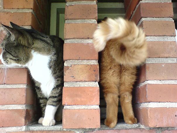 foto-gatti-divertenti-tempismo-perfetto-32