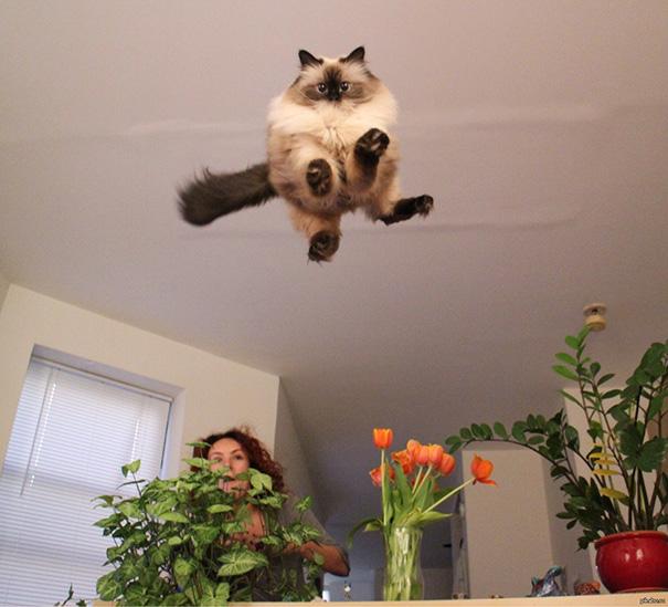 foto-gatti-divertenti-tempismo-perfetto-34