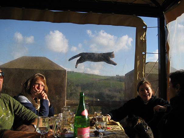 foto-gatti-divertenti-tempismo-perfetto-35