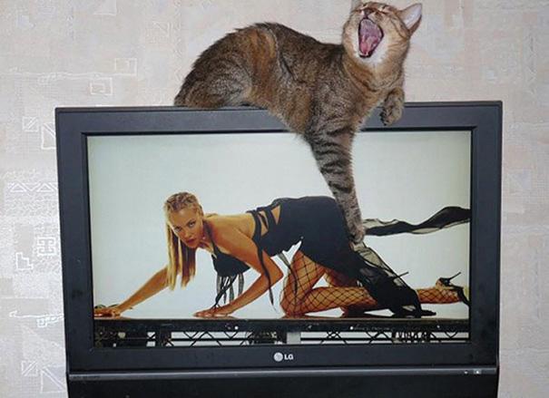 foto-gatti-divertenti-tempismo-perfetto-36