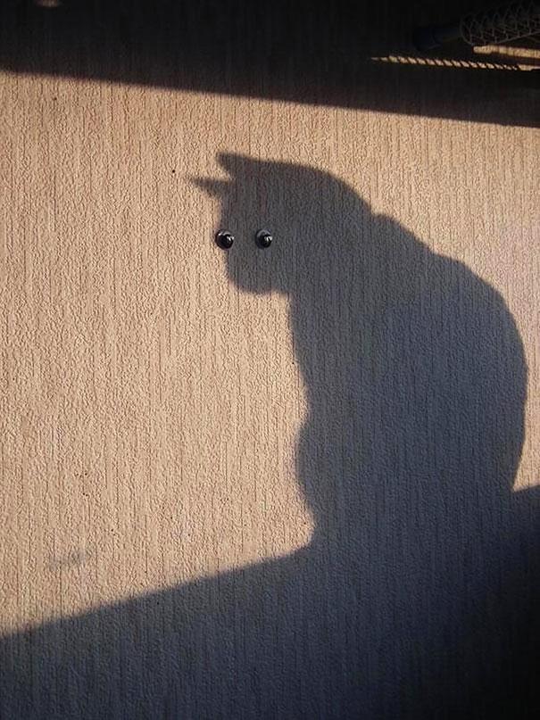 foto-gatti-divertenti-tempismo-perfetto-38