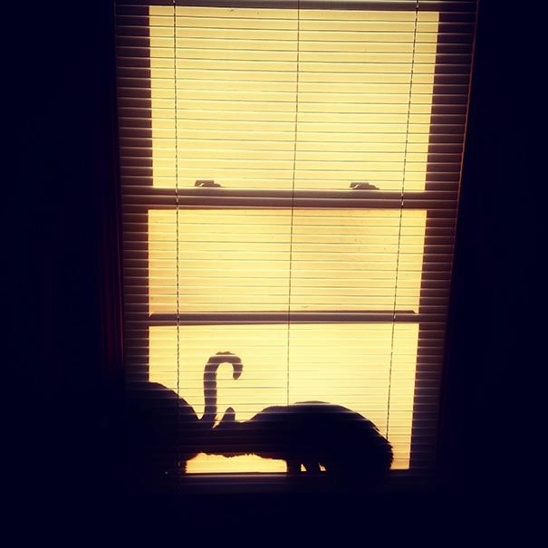 foto-gatti-divertenti-tempismo-perfetto-41