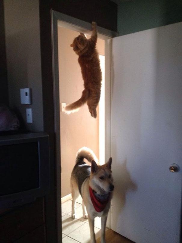 foto-gatti-divertenti-tempismo-perfetto-43