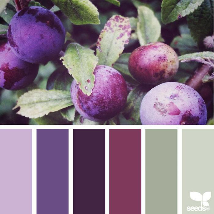 foto-natura-tavolozze-colori-design-seeds-colaluca-05