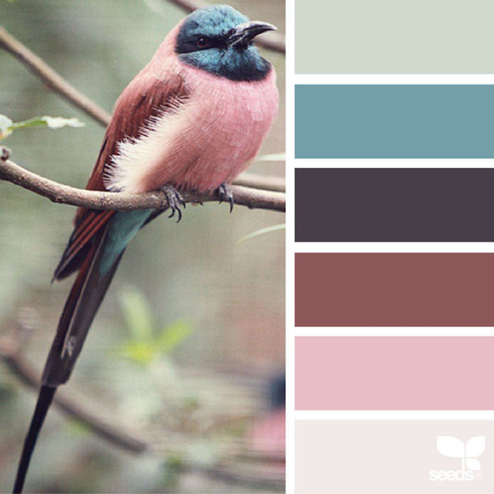 foto-natura-tavolozze-colori-design-seeds-colaluca-11