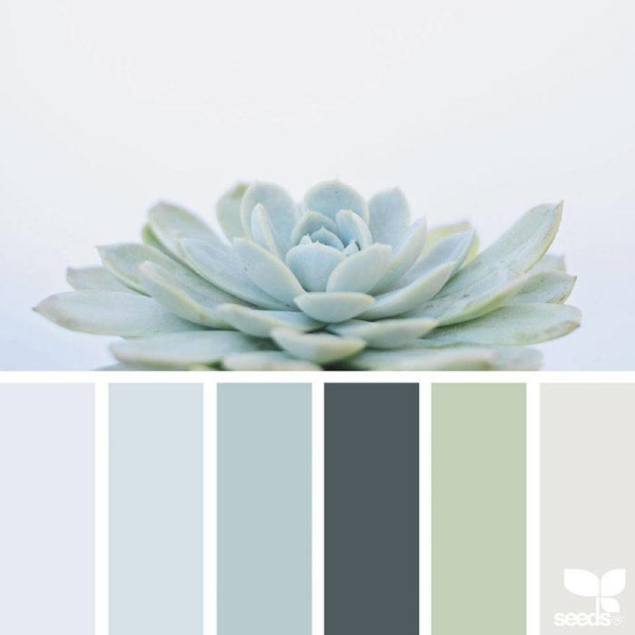 foto-natura-tavolozze-colori-design-seeds-colaluca-13